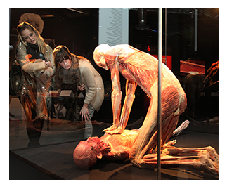 body worlds exhibition s