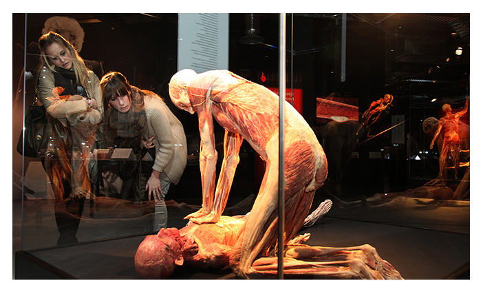 body worlds florence exhibition b